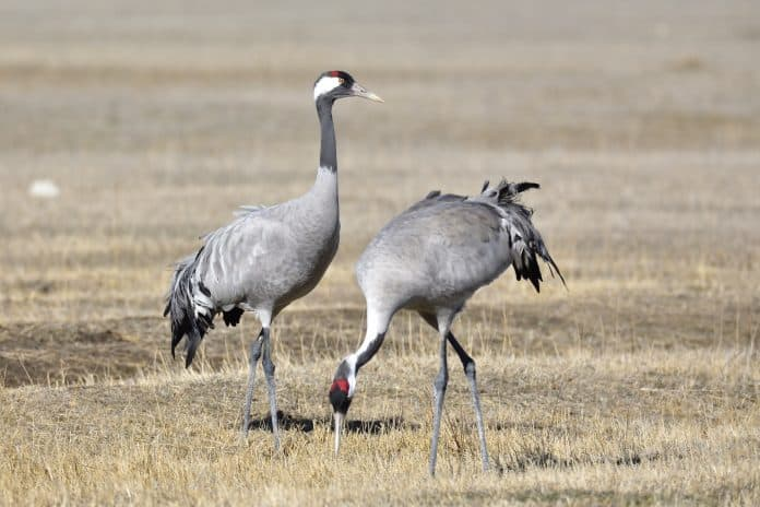 Cranes, photo by Santiago Lacarta on Unsplash