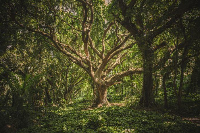 Tree in forest, photo by veeterzy on Unsplash