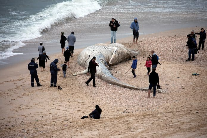 People stand near the body of a dead fin whale in Israel, photo: Reuters/Amir Cohen