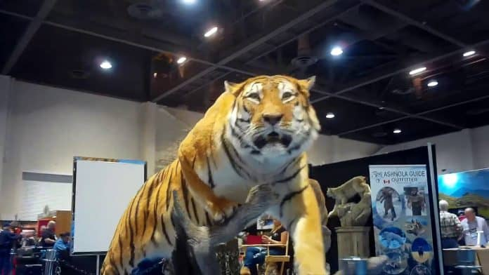 A tiger is exhibited at a hunting exhibition