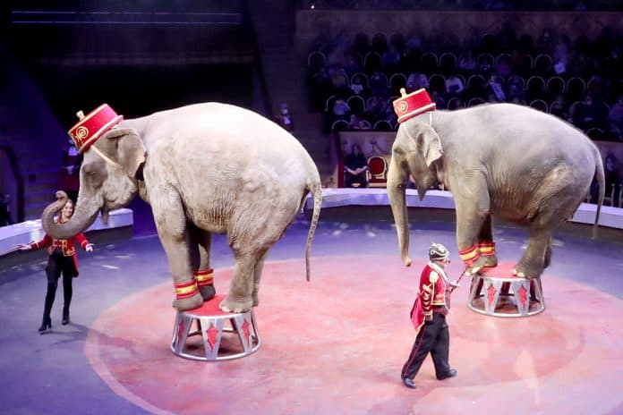 Togni Family performs with elephants in a Circo Togni show at the Bolshoi St Petersburg State Circus in Russia, photo: Alexander Demianchuk/TASS