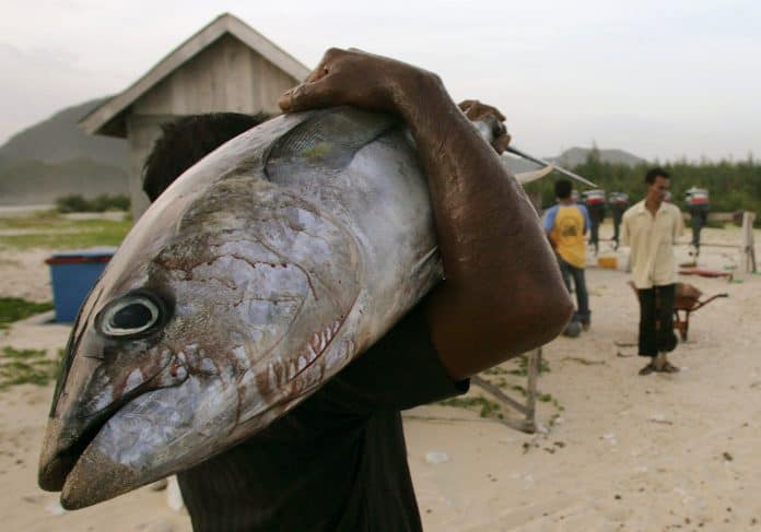 Fisherman carries a dead tuna fish, photo: Reuters/Tarmizy Harva