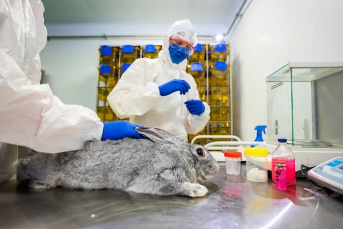 Lab rabbit looks terrified while specialists do coronavirus vaccine tests on him at a laboratory in Russia, Photo: VETANDLIFE.RU/Reuters