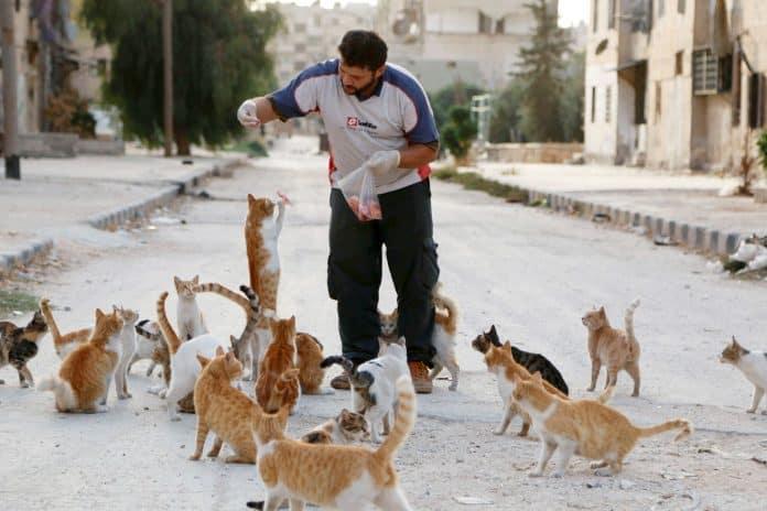 Alaa, an ambulance driver, feeds cats in Masaken Hanano in Aleppo, Syria, photo: Reuters/Hosam Katan