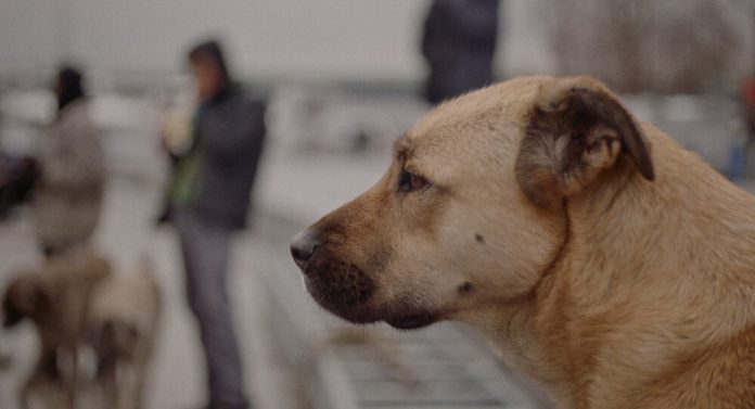 A scene from STRAY, photo: Magnolia Pictures