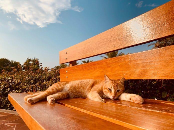 Kitten op bench in Dubai, photo: Shreyas Gupta on Unsplash