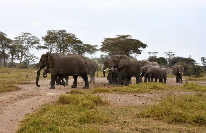 Elephants in Kenia, photo: Wilmy van Ulft on Unsplash