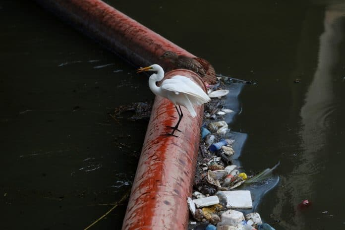 A bird on a garbage cleaner at Pinheiros river in Sao Paulo, Brazil, credit: Reuters/Amanda Perobelli