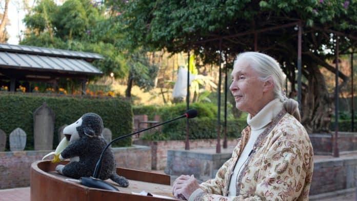 Dr. Jane Goodall speaks at conference in Nepal, photo: Shikhar Bhattarai via Unsplash
