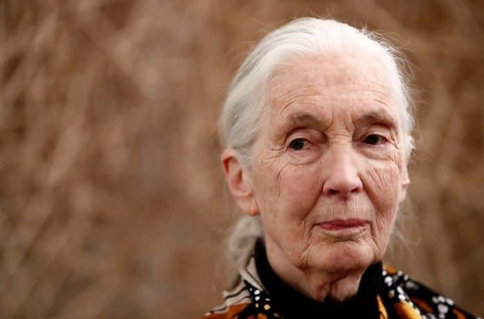 British primatologist Jane Goodall, photo: Reuters/ Christian Hartmann
