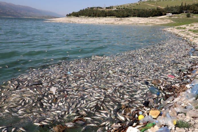 Dead fish are seen floating in Lake Qaraoun, Lebanon, photo: Reuters/Mohamed Azakir