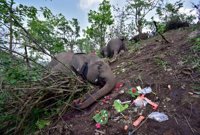 Carcasses of elephants, Assam, India, photo: Reuters/Anuwar Hazarika