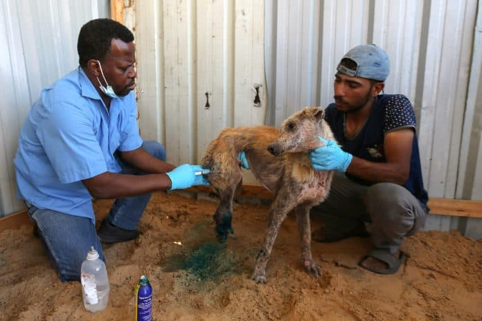 Palestinians treat a dog who was wounded from the Israeli airstrikes in Gaza, photo: Reuters/Ibraheem Abu Mustafa