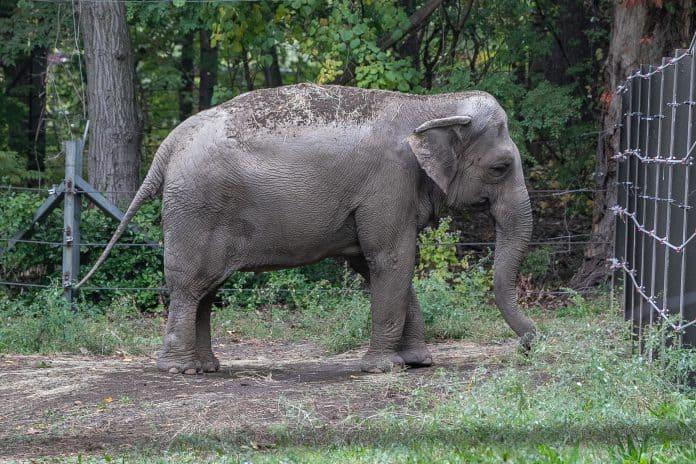 Happy at the Bronx zoo, photo: Gigi Glendinning