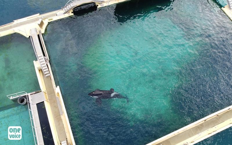 Orca Inouk at Marineland, photo: One Voice