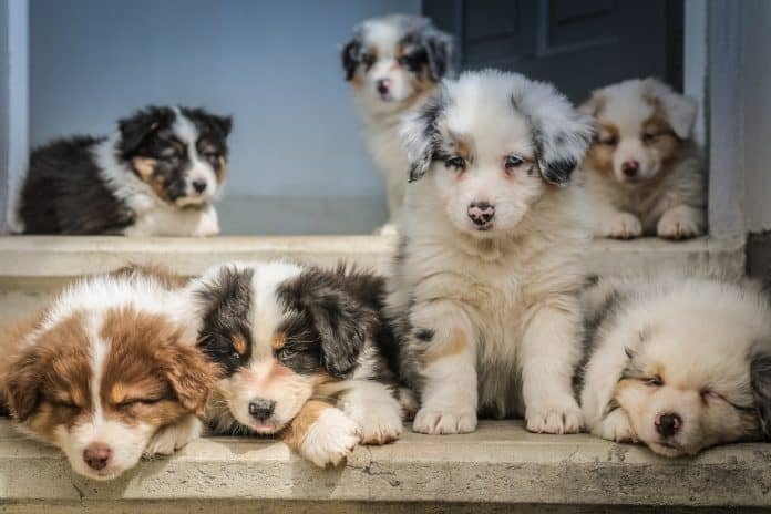 Puppies, photo: Jametlene Reskp on Unsplash