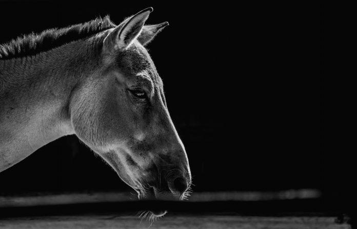 Horse, photo: Marko BlaževićonUnsplash