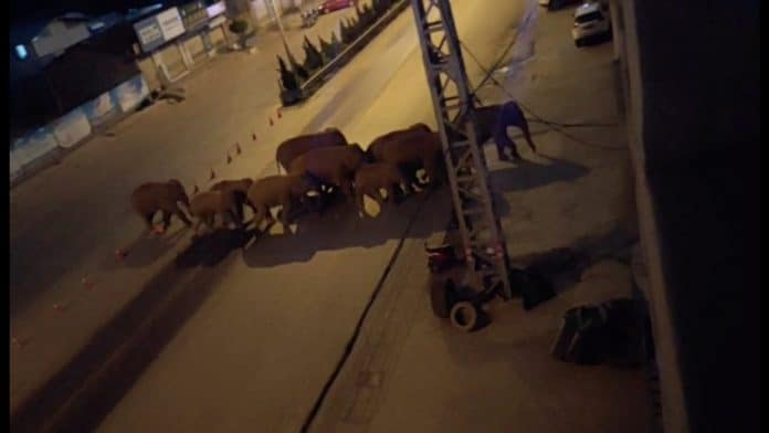A herd of elephants walk along a road in Eshan, Yunan, China, photo: still from video Eshan County Fang Yuan Car Care Center/ via Reuters