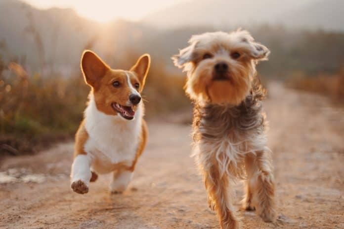 Dogs, photo: Alvan Nee on Unsplash