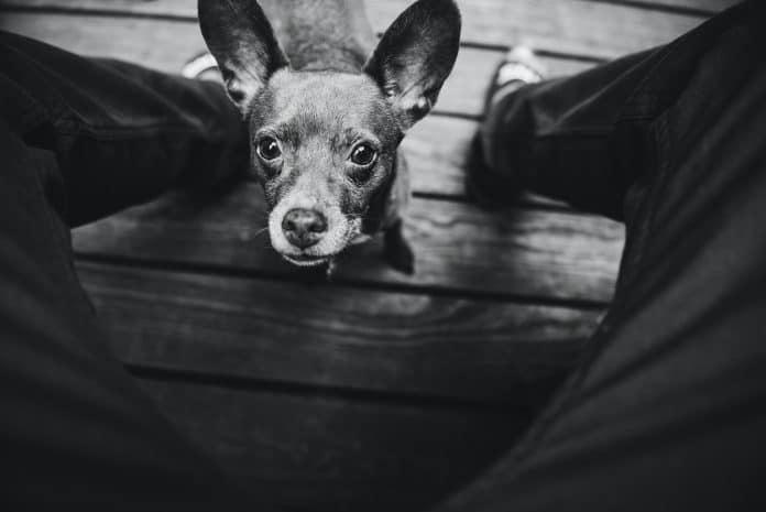Dog looks up to human, photo: Craig Philbrick on Unsplash
